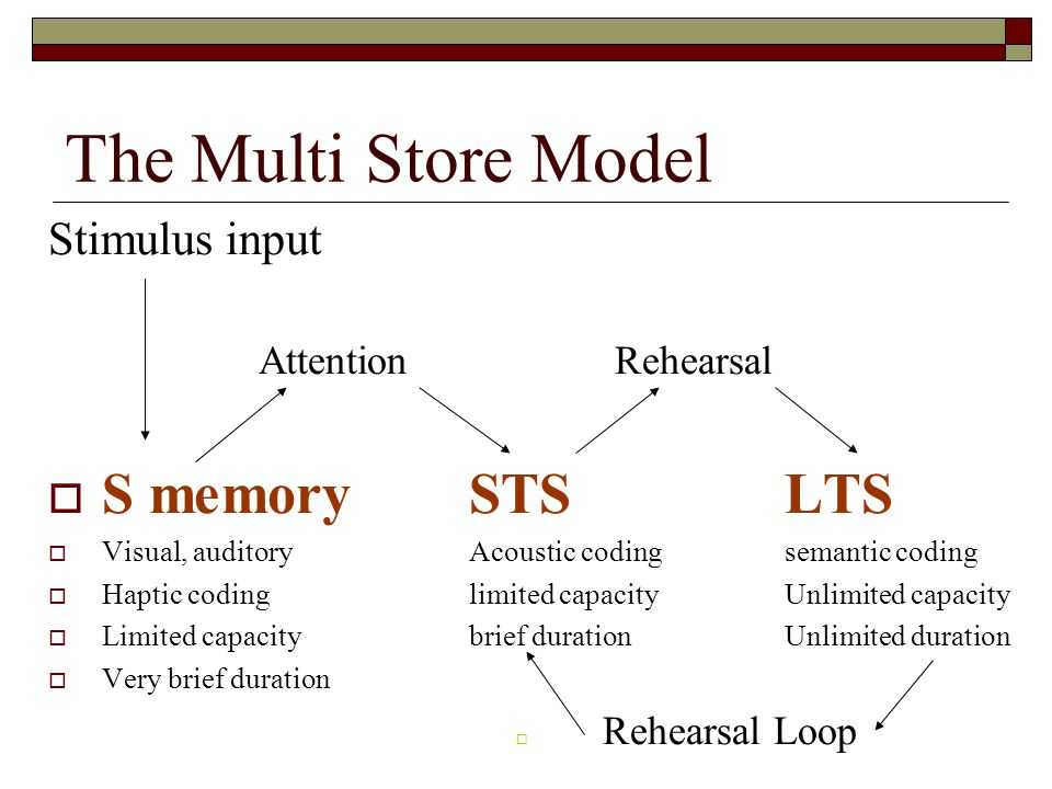 The Multi Store Model S memory STS LTS Stimulus input