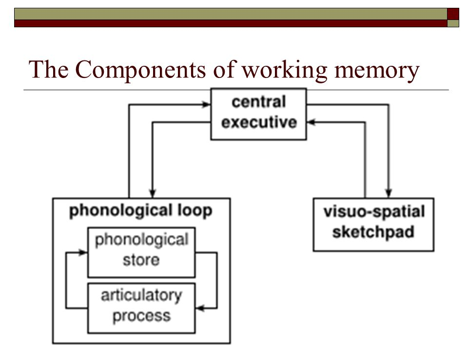The Components of working memory