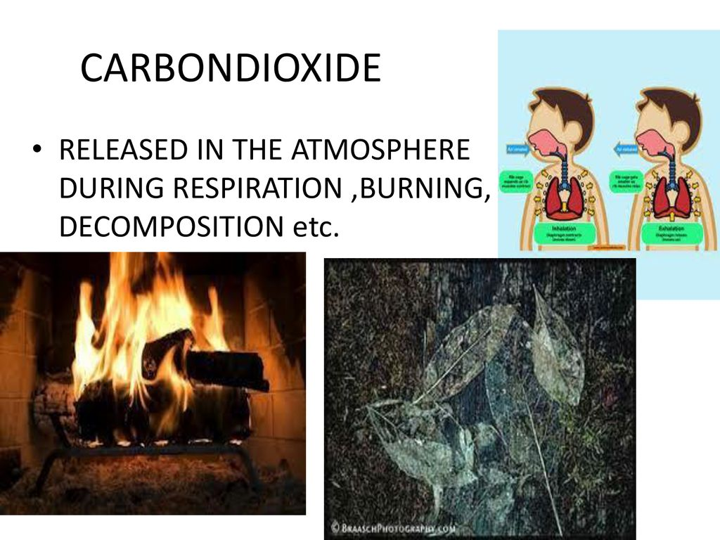 CARBONDIOXIDE RELEASED IN THE ATMOSPHERE DURING RESPIRATION ,BURNING, DECOMPOSITION etc.