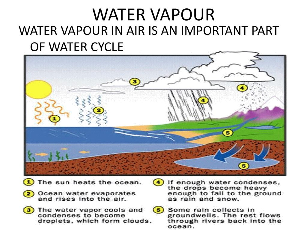 WATER VAPOUR WATER VAPOUR IN AIR IS AN IMPORTANT PART OF WATER CYCLE