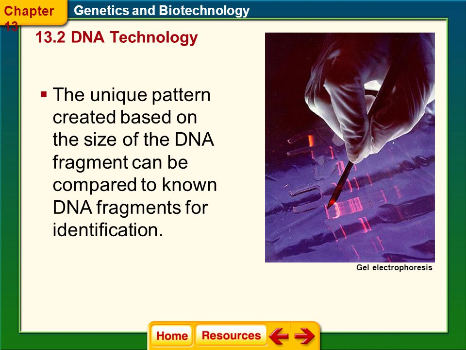 Chapter 13 Genetics and Biotechnology DNA Technology. Gel electrophoresis.
