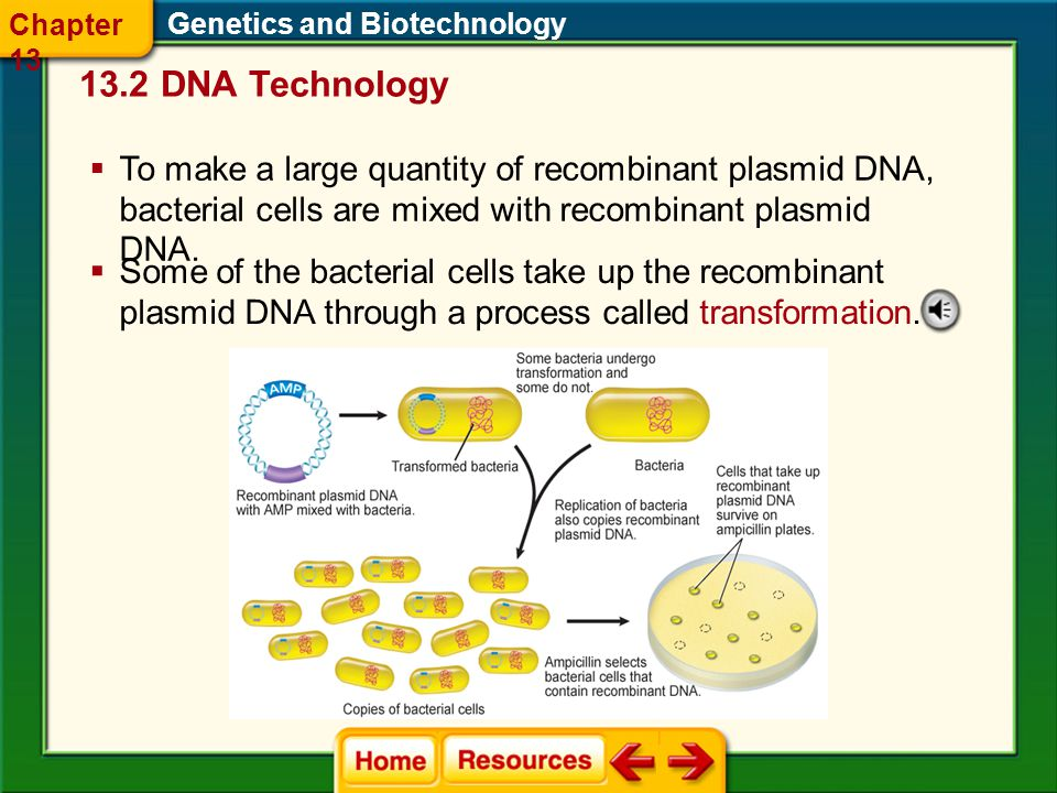 Chapter 13 Genetics and Biotechnology DNA Technology.