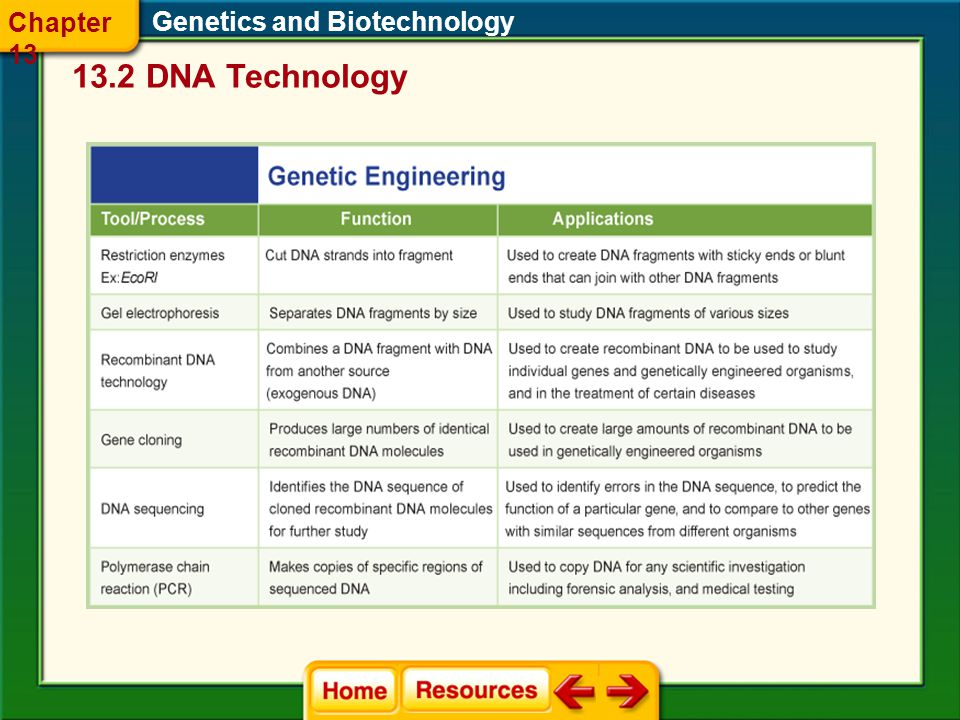 Chapter 13 Genetics and Biotechnology 13.2 DNA Technology