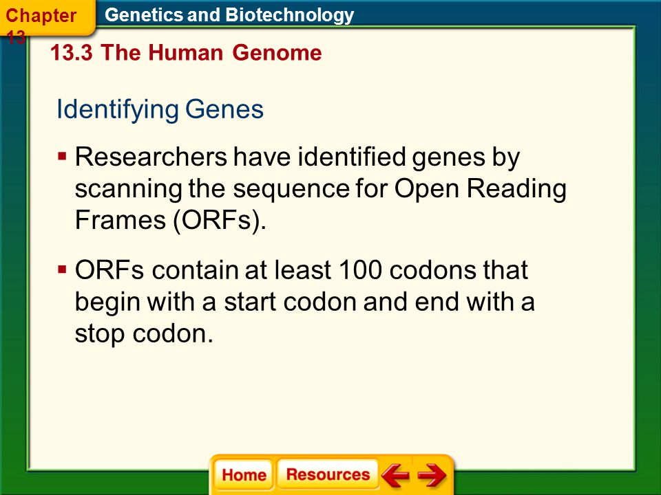 Chapter 13 Genetics and Biotechnology The Human Genome. Identifying Genes.