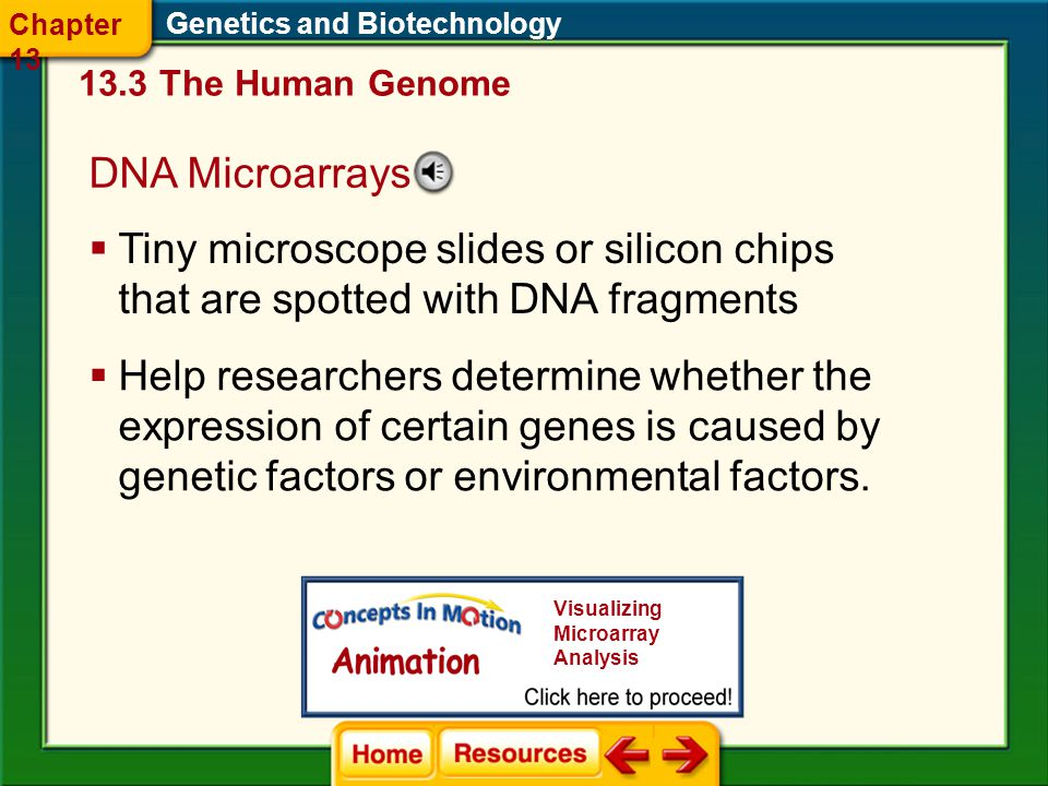 Chapter 13 Genetics and Biotechnology The Human Genome. DNA Microarrays.