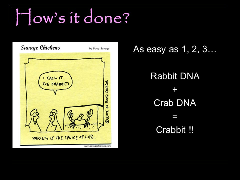 As easy as 1, 2, 3… Rabbit DNA + Crab DNA = Crabbit !!