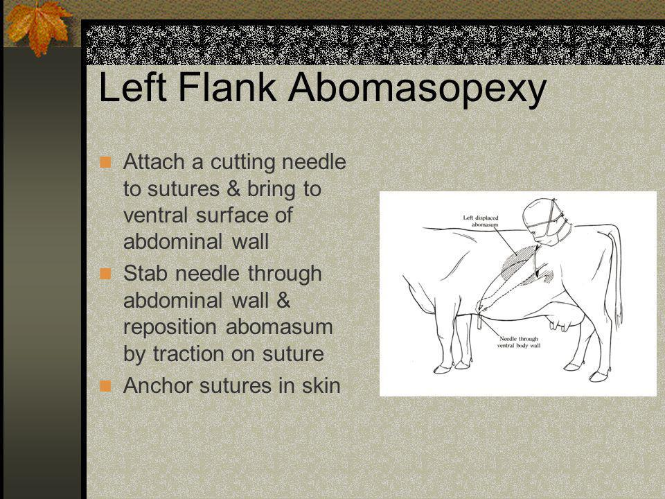Left Flank Abomasopexy