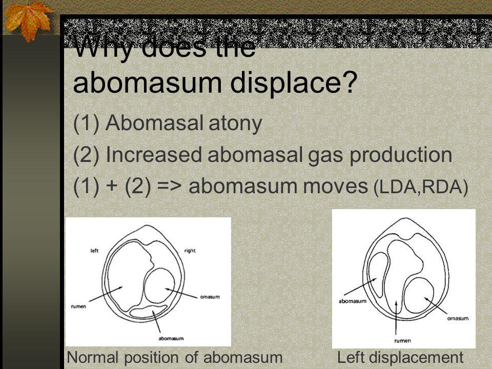 Why does the abomasum displace