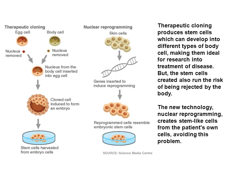 Therapeutic cloning produces stem cells which can develop into different types of body cell, making them ideal for research into treatment of disease.