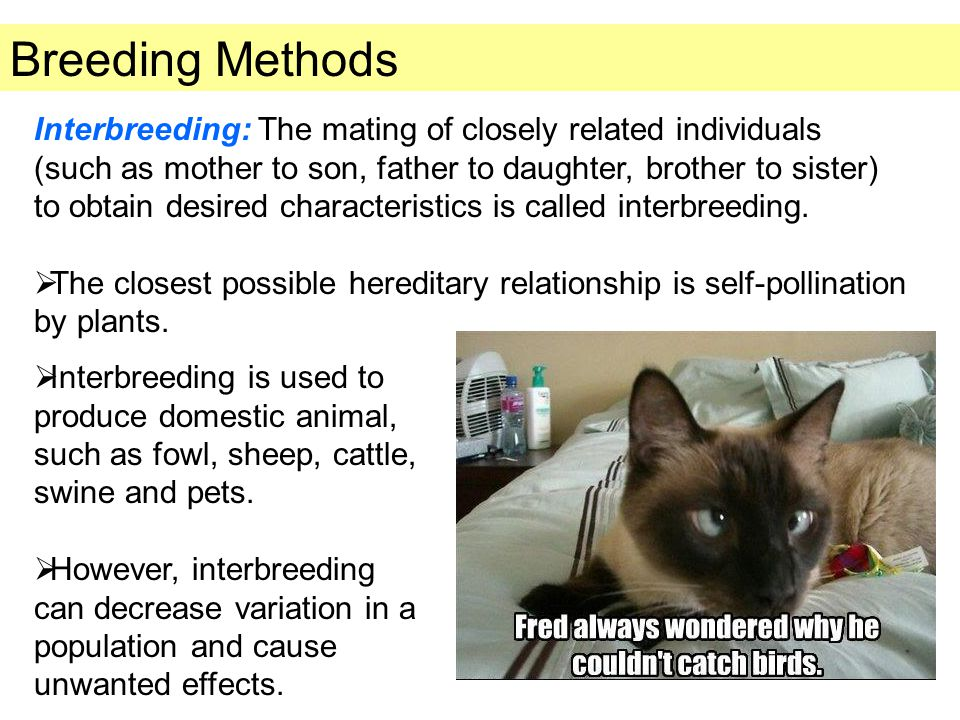 Breeding Methods
