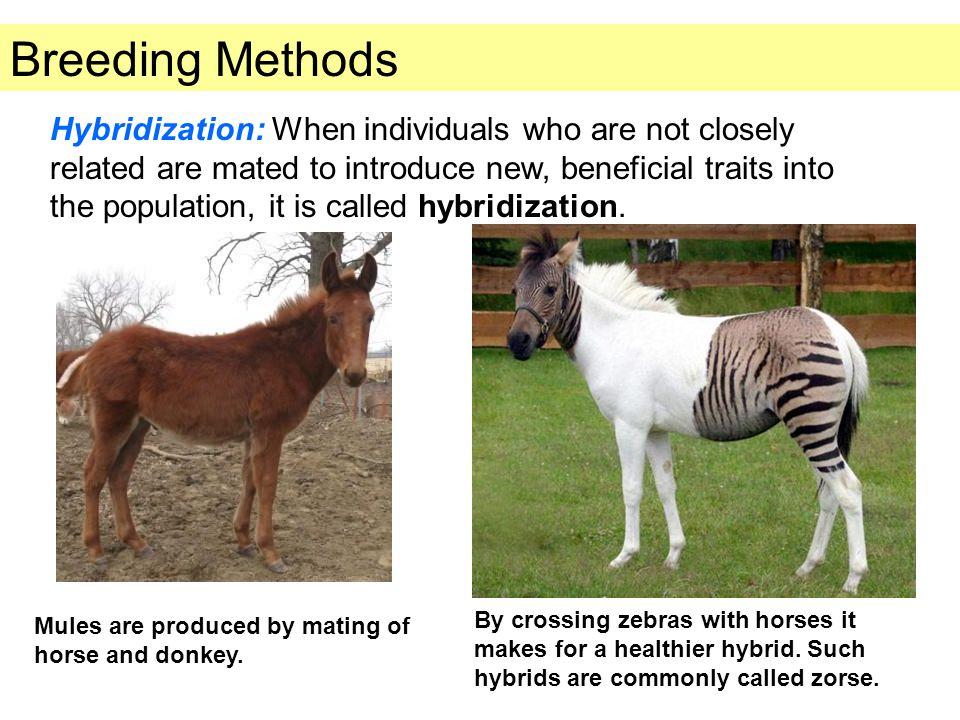 Breeding Methods