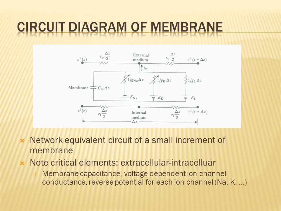 Circuit Diagram of Membrane