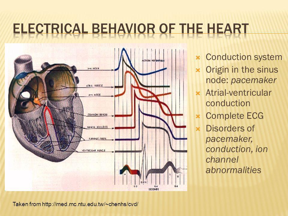 Electrical Behavior of the Heart