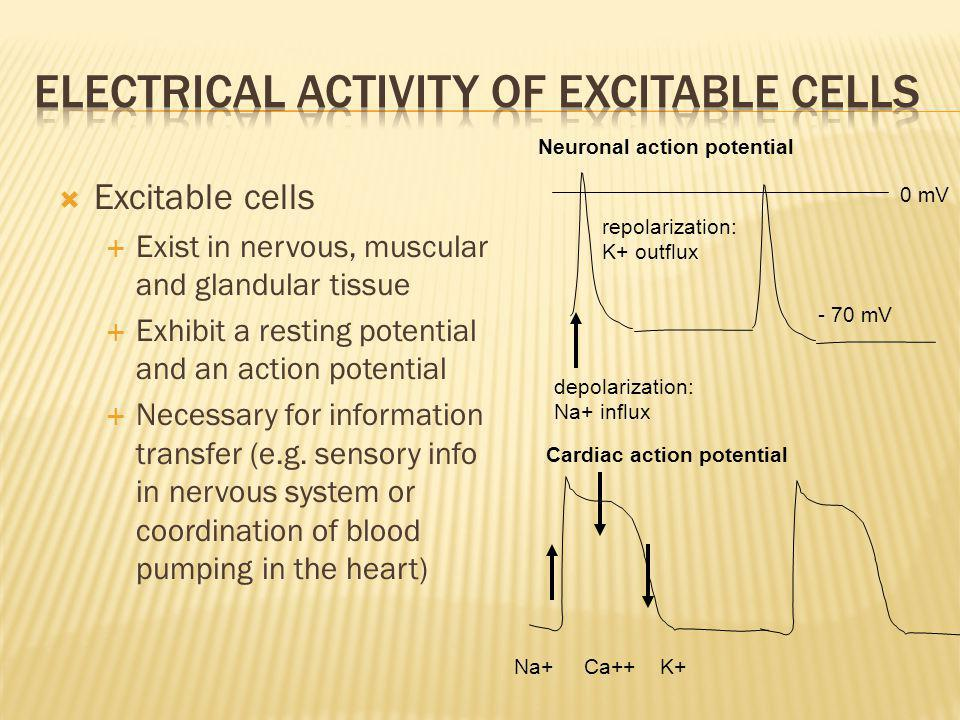 Electrical Activity of Excitable Cells