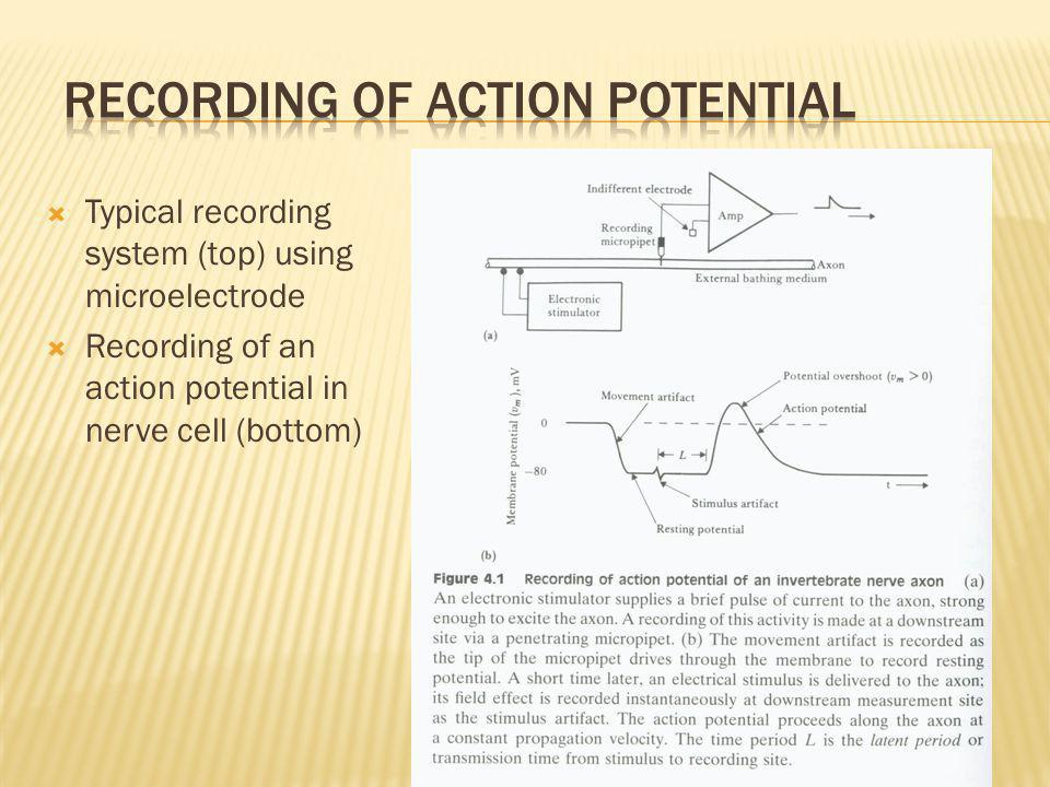 Recording of Action Potential