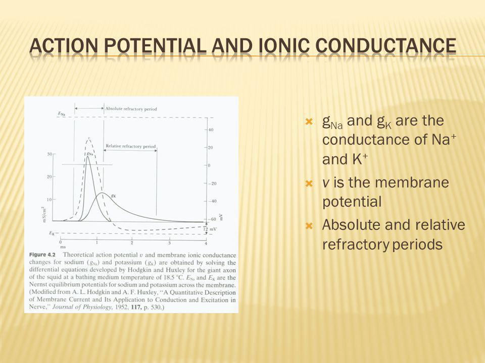 Action Potential and Ionic Conductance