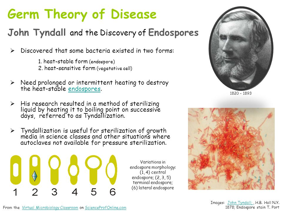 Germ Theory of Disease John Tyndall and the Discovery of Endospores