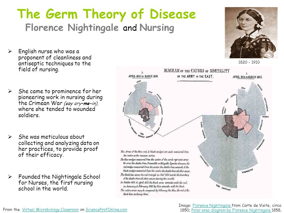 The Germ Theory of Disease Florence Nightingale and Nursing