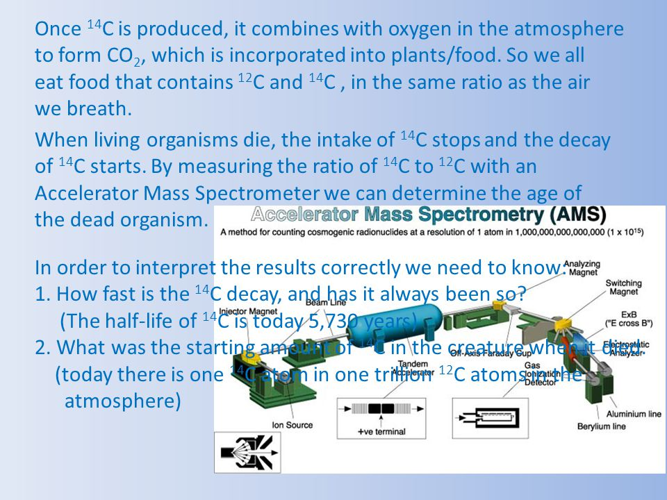 Once 14C is produced, it combines with oxygen in the atmosphere to form CO2, which is incorporated into plants/food. So we all eat food that contains 12C and 14C , in the same ratio as the air we breath.