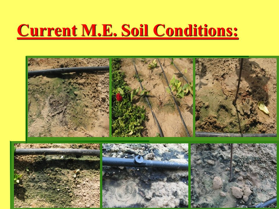 Current M.E. Soil Conditions:
