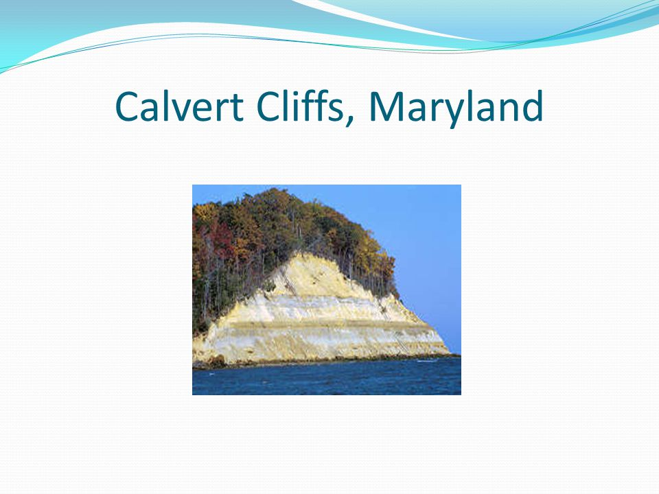 Calvert Cliffs, Maryland