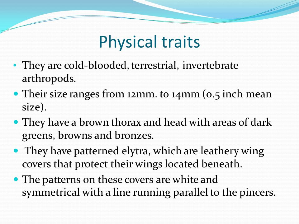 Physical traits They are cold-blooded, terrestrial, invertebrate arthropods. Their size ranges from 12mm. to 14mm (0.5 inch mean size).