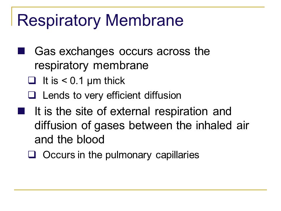 Respiratory Membrane Gas exchanges occurs across the respiratory membrane. It is < 0.1 μm thick. Lends to very efficient diffusion.