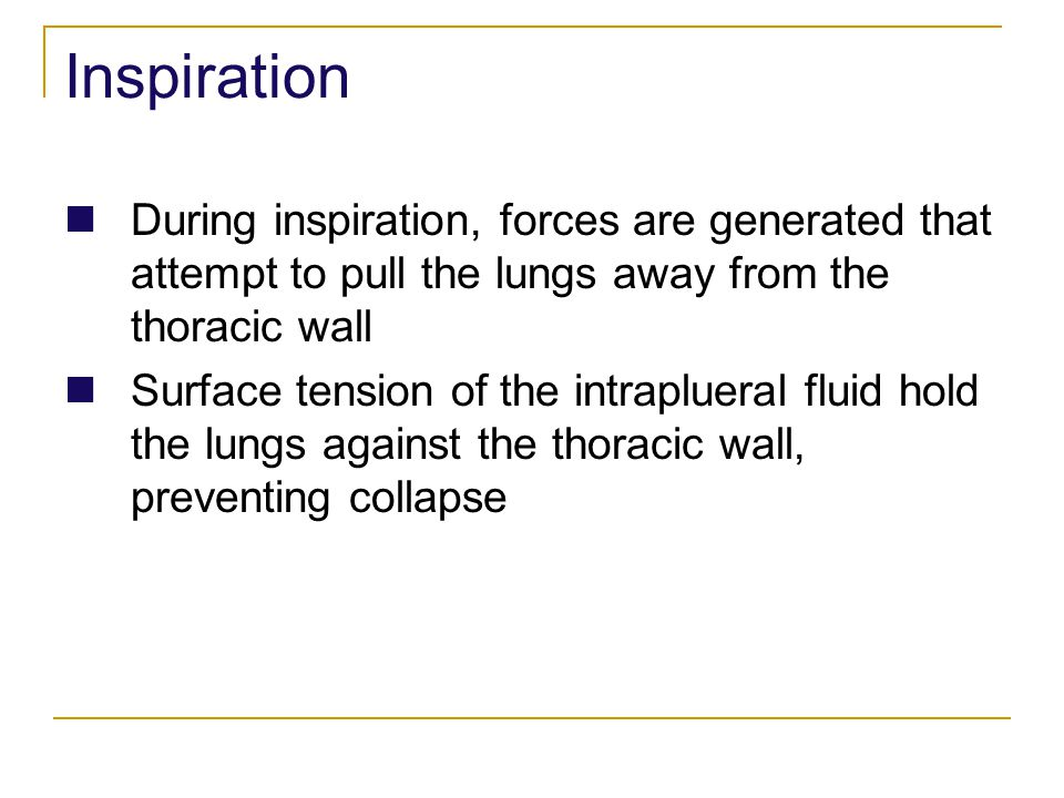 Inspiration During inspiration, forces are generated that attempt to pull the lungs away from the thoracic wall.