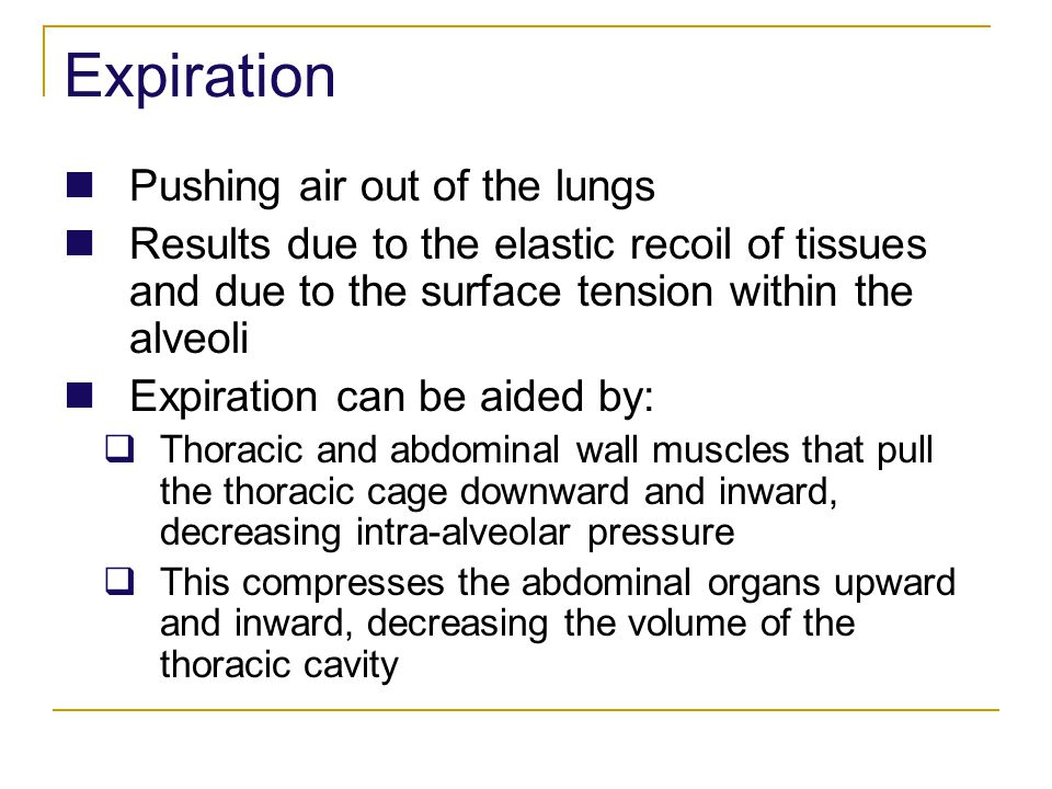 Expiration Pushing air out of the lungs