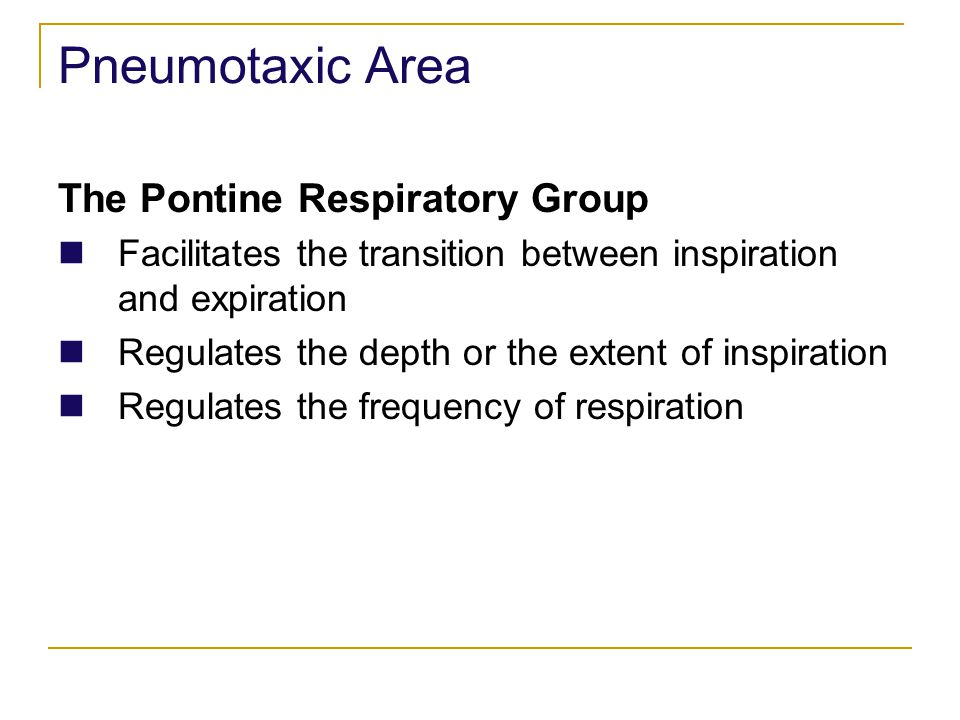 Pneumotaxic Area The Pontine Respiratory Group
