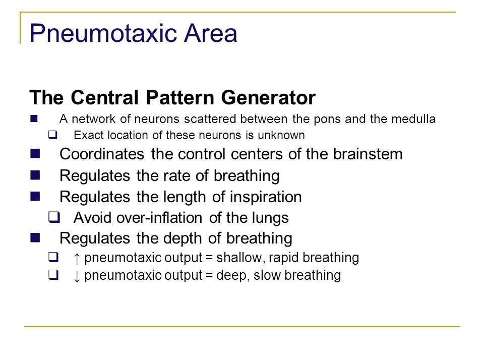 Pneumotaxic Area The Central Pattern Generator