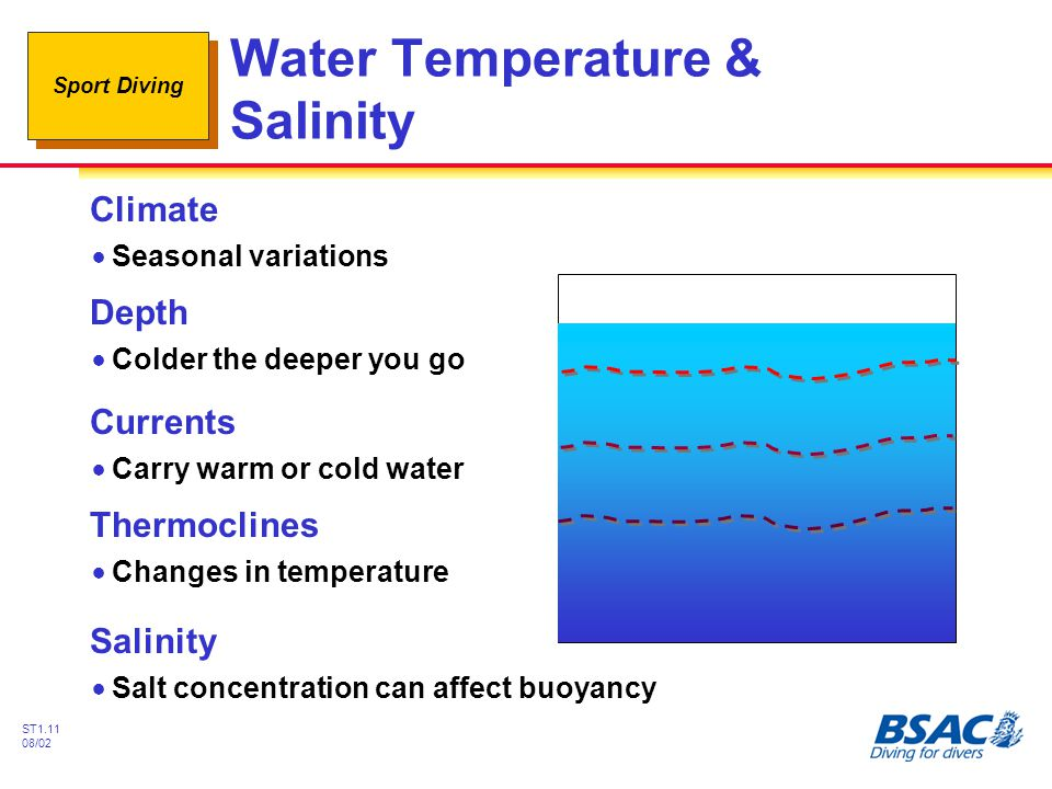 Water Temperature & Salinity