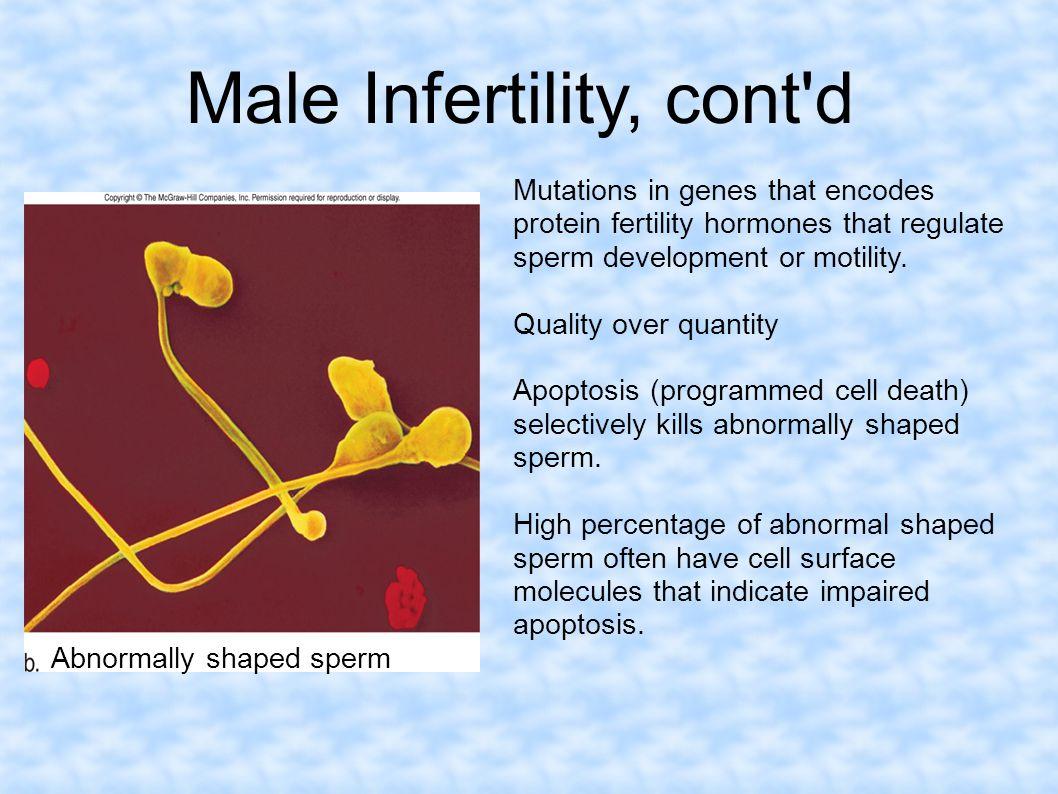 Male Infertility, cont d