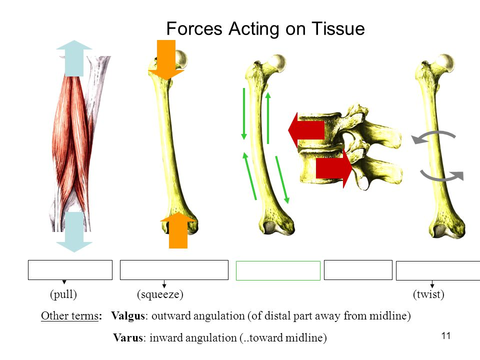 Forces Acting on Tissue