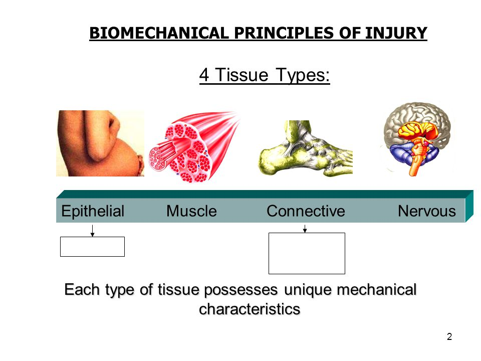Each type of tissue possesses unique mechanical characteristics