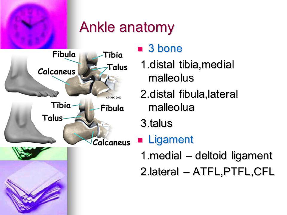 Ankle anatomy 3 bone 1.distal tibia,medial malleolus