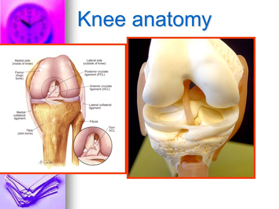7ee Injury Diagnosis Ppt Video Online Download