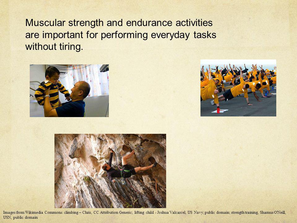 Muscular strength and endurance activities are important for performing everyday tasks without tiring.