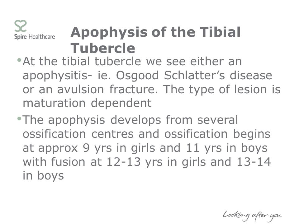 Apophysis of the Tibial Tubercle