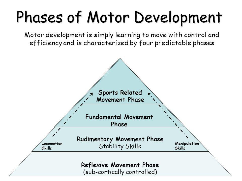 phases of motor development ppt video online download