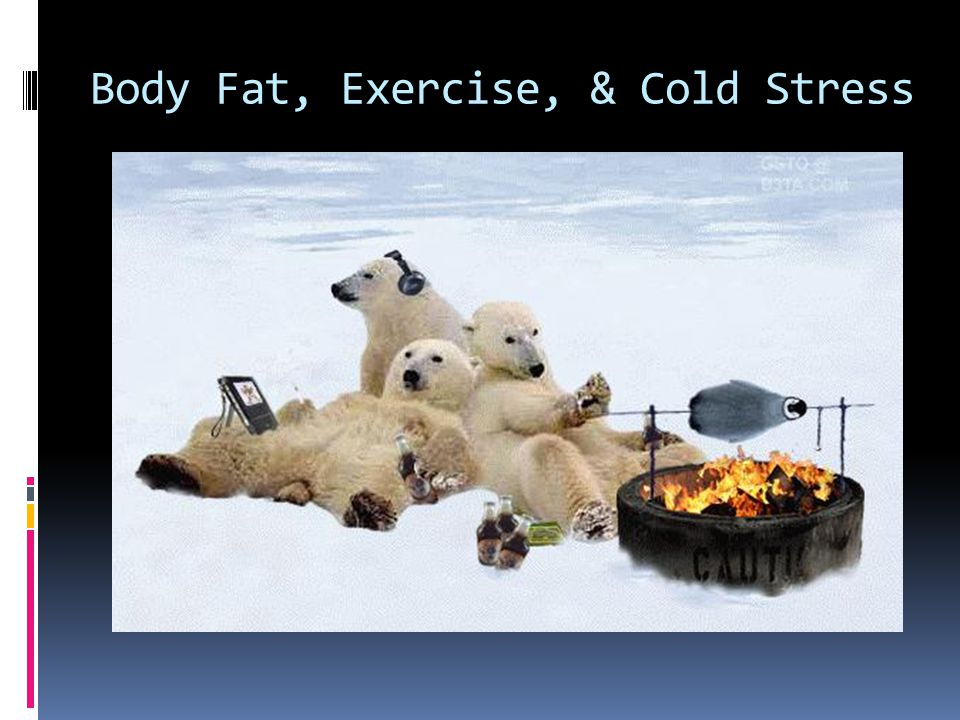 Body Fat, Exercise, & Cold Stress