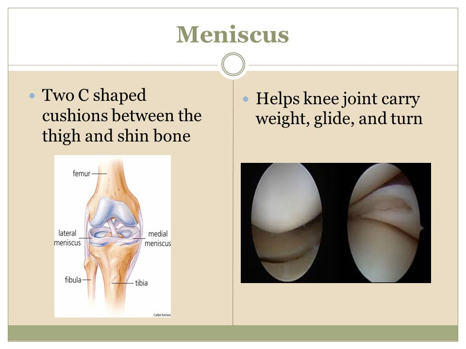 Meniscus Two C shaped cushions between the thigh and shin bone