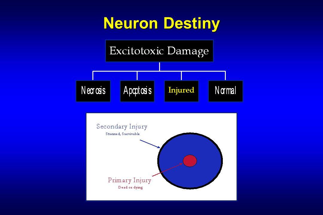 Neuron Destiny Injured
