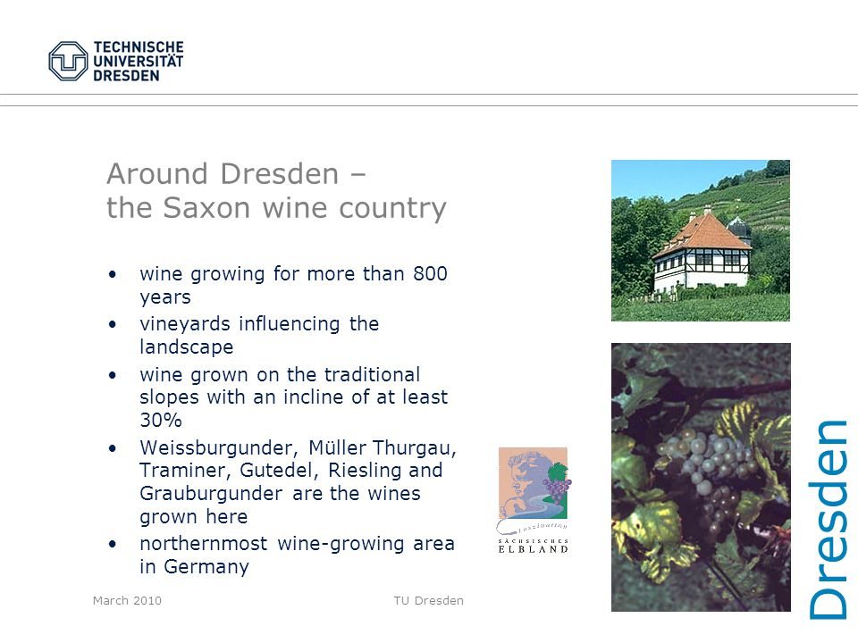Around Dresden – the Saxon wine country