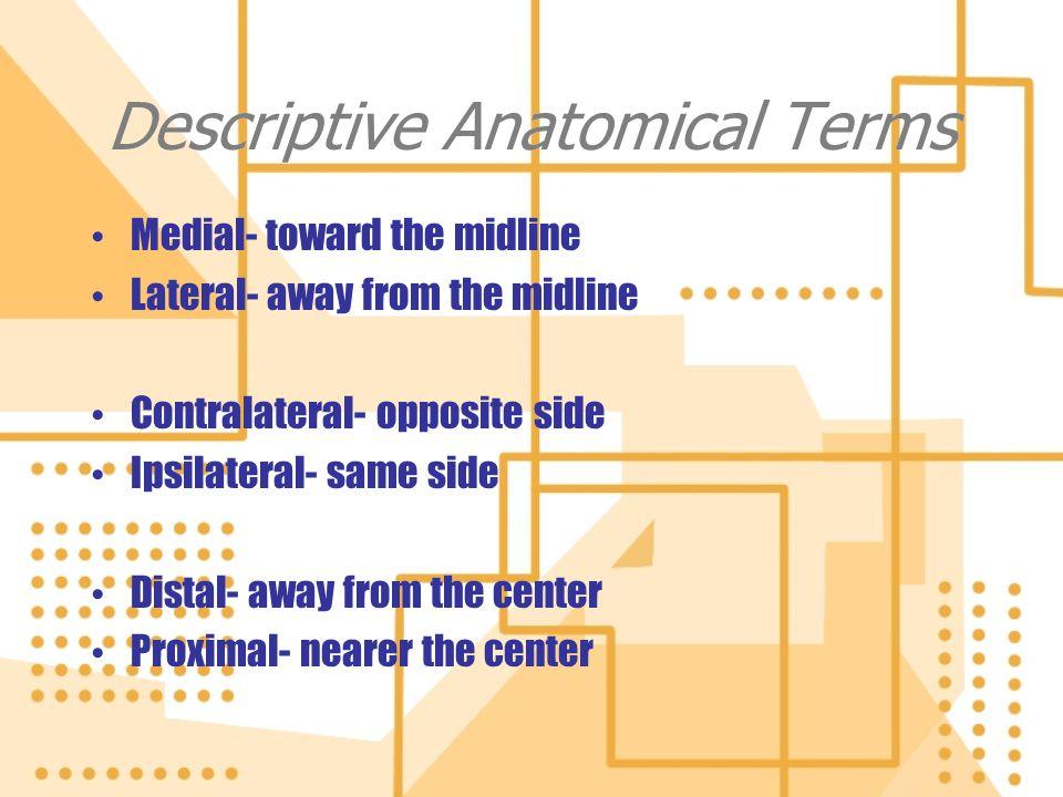 Descriptive Anatomical Terms