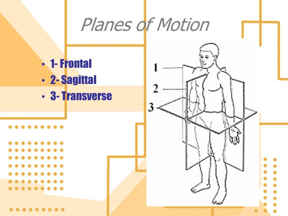 Planes of Motion 1- Frontal 2- Sagittal 3- Transverse