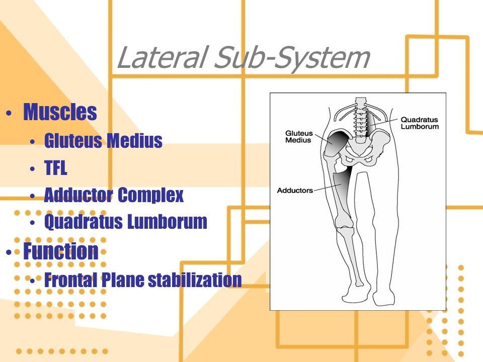 Lateral Sub-System Muscles Function Gluteus Medius TFL
