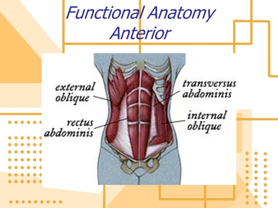 Functional Anatomy Anterior