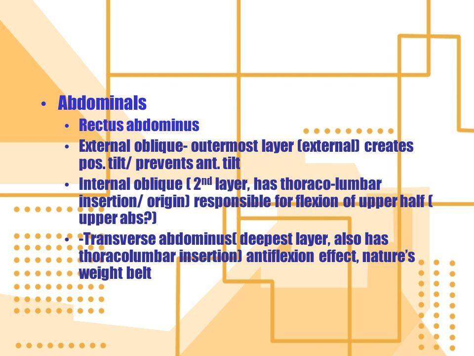 Abdominals Rectus abdominus