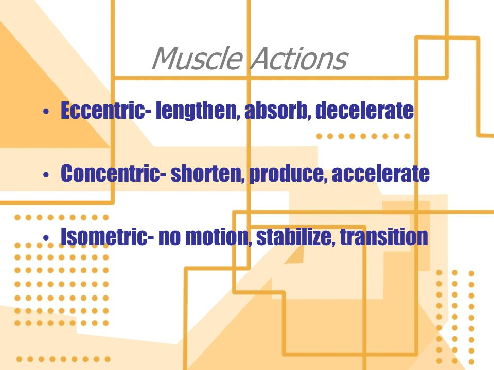 Muscle Actions Eccentric- lengthen, absorb, decelerate